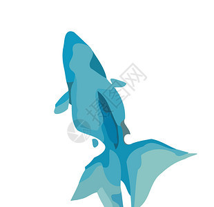 bluefish图片