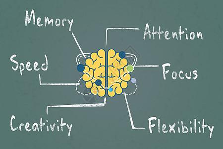 大脑分区素材图片