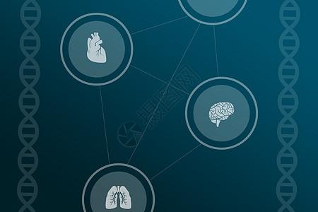 医疗人体图片