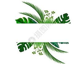 水彩热带树叶图案图片