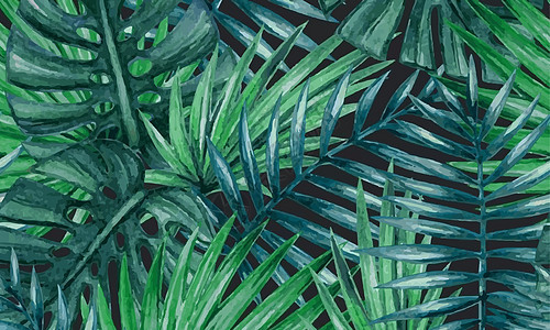 植物叶子素材图片