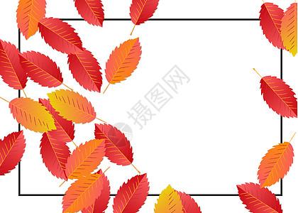 手绘秋季枫叶装饰框图片