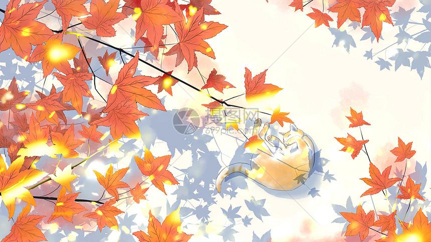 治愈系插画秋天的喵图片