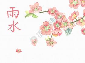 杏花雨水图片