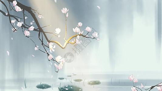 中国风手绘玉兰花插画图片
