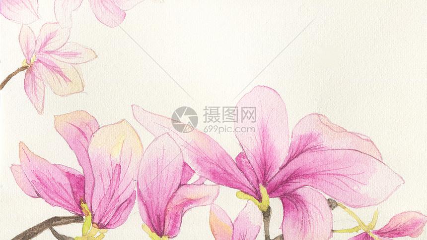 春分木兰花手绘