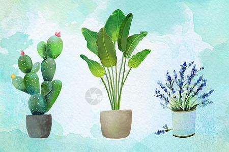 绿色小清新植物图片