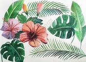 热带植物插画素材图片