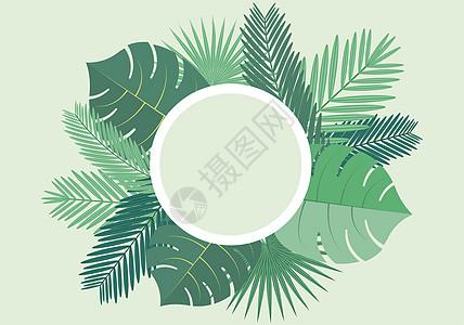 热带树叶高清图片