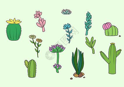 彩绘多肉植物图片