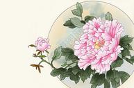 纯手绘工笔牡丹花插画图片