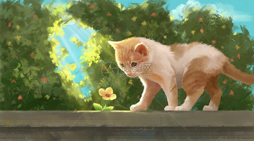 围墙上的猫咪图片