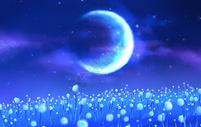 月光下的蒲公英图片