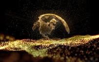 黑金地球背景图片