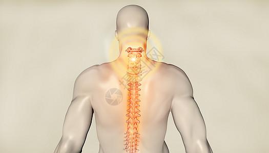 后背颈椎背景图片