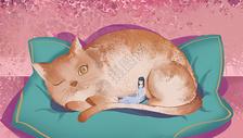 橘猫和睡觉的人图片