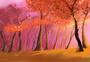 夕阳中的枫树林图片