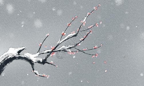 冬日梅花图片