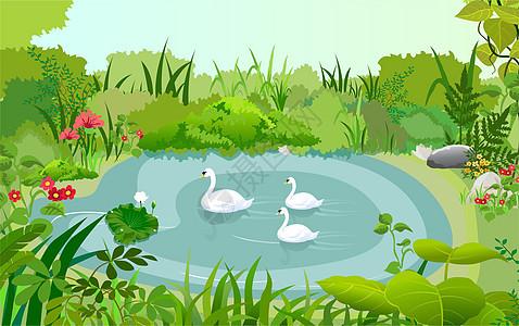 溪水的鹅图片
