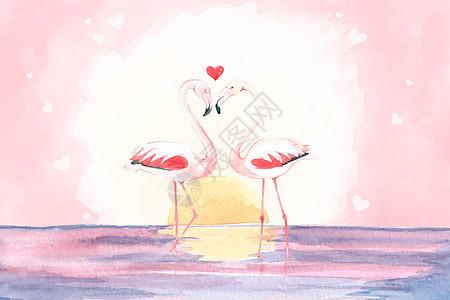 爱情火烈鸟图片
