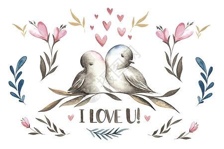 爱情鸟水彩图片