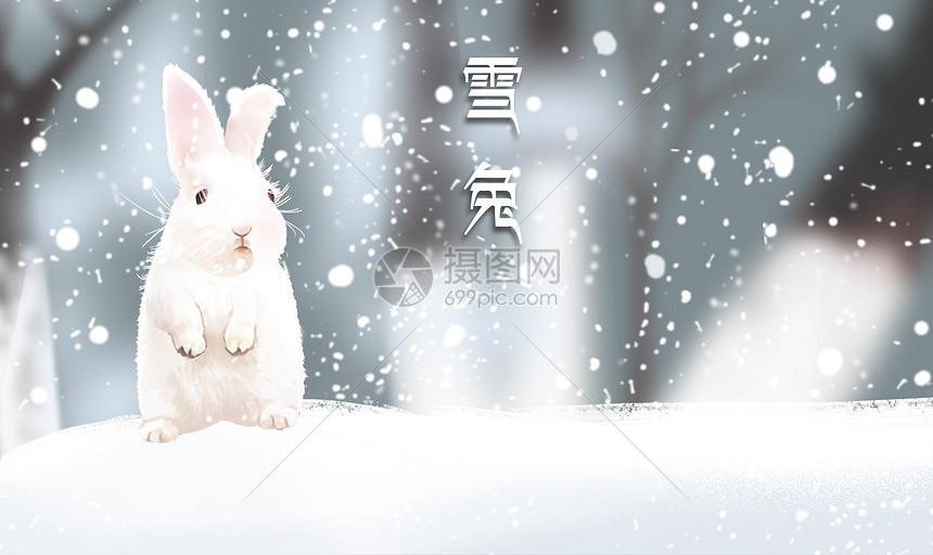 雪地上的兔子图片