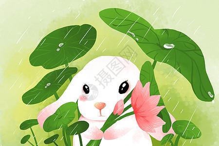 春天萌宠小白兔图片