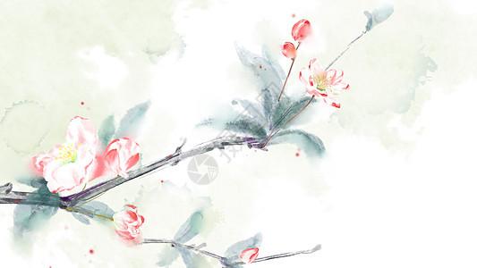 古风海棠花插画图片