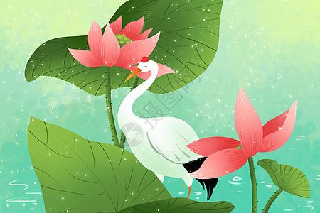 荷花与白鹤图片
