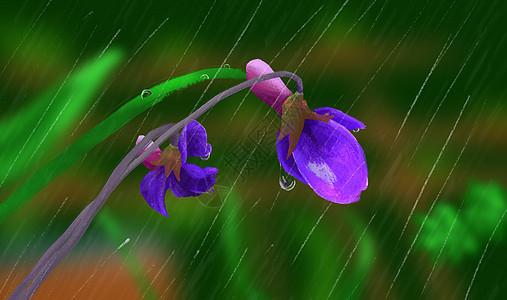 雨里的花朵图片