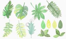 水彩绿叶素材图片