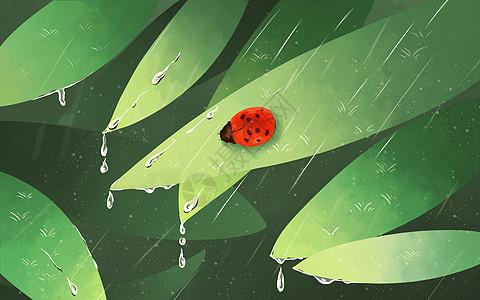树叶上的甲壳虫图片