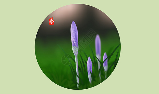 春天里的花朵图片