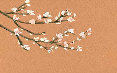 盛开的杏花图片