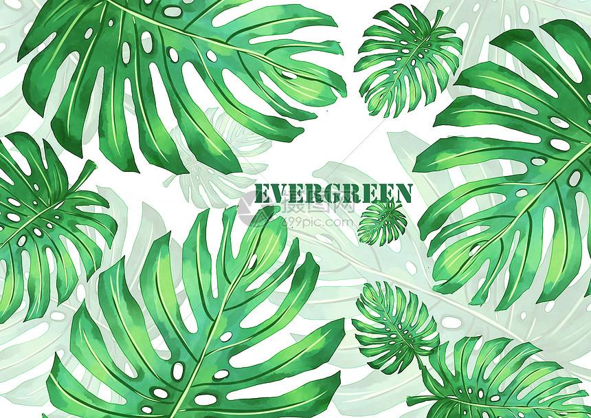 龟背竹植物背景图片素材_免费下载_psd图片格