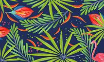 热带植被背景图片