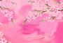 春天来了满园樱花蝴蝶图片