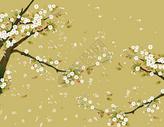 樱花花卉背景图片
