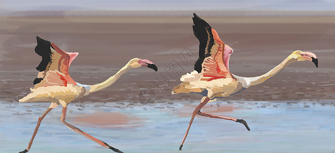 火烈鸟图片