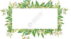 夏天植物背景图片