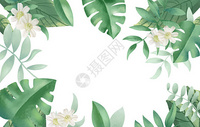 热带植物花卉图片