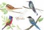 水彩手绘鸟类素材图片