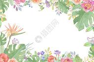 小清新花卉插画图片