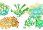 多肉植物元素图片
