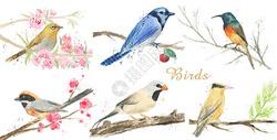 手绘水彩鸟素材图片