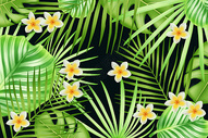 热带植物背景素材图片