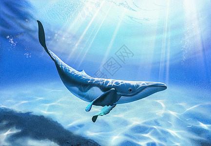 海底的鲸鱼图片