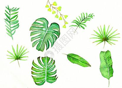 水彩插画绿植高清图片
