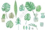 植物叶子背景素材图片