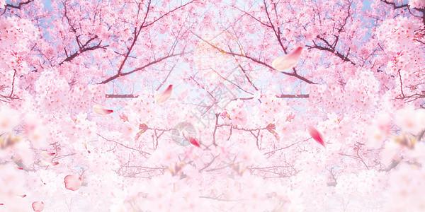 唯美粉色樱花图片